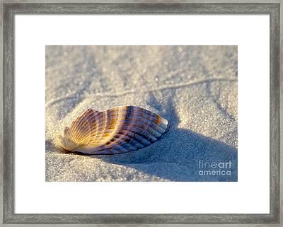 Illumination Framed Print by Liz Masoner
