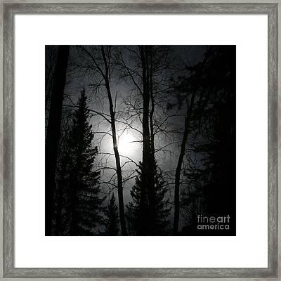Illumination Framed Print by Sharon Mau