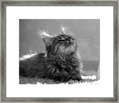 Illumination Framed Print by Silke Brubaker