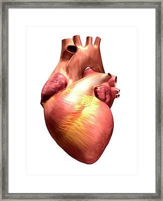 Illustration Of A Human Heart Framed Print by Harvinder Singh