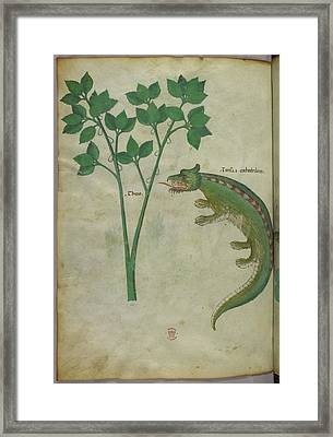 Illustration Of A Plant And A Crocodile Framed Print