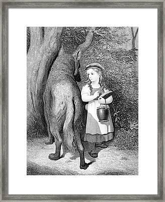 Illustration Of Little Red Riding Hood Framed Print