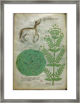 Illustration Of Plant With Horse Framed Print by British Library