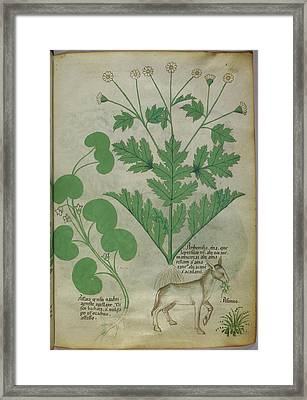 Illustration Of Plants And A Donkey Framed Print by British Library