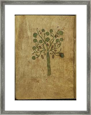 Illustration Of Tree With Fruits Framed Print