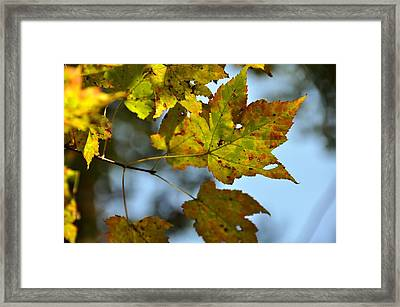 Ilovefall Framed Print by JAMART Photography