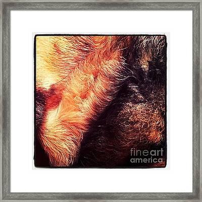 #ilovemydog #dog #germanshepherddog Framed Print