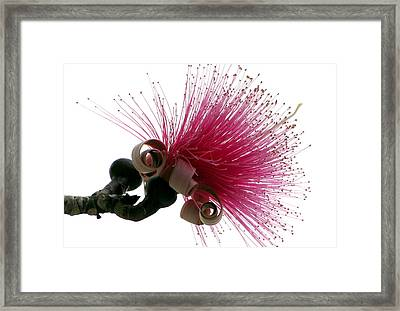 Im A Flower Framed Print