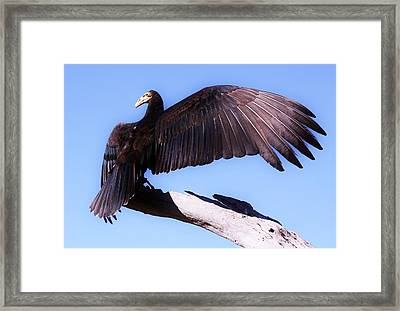 I'm A Pretty Bird Framed Print by Paulette Thomas