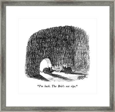 I'm Back.  The Brie's Not Ripe Framed Print