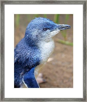 I'm Blue - Penguin Framed Print by DerekTXFactor Creative