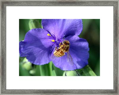 I'm Busy Framed Print