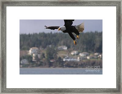 I'm Coming In For A Landing Framed Print by Kym Backland