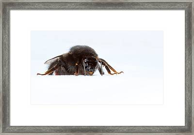 I'm Coming To Get You Framed Print