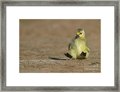 Framed Print featuring the photograph I'm Falling by Bryan Keil