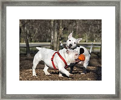 I'm Going Home Framed Print by Steven Michael