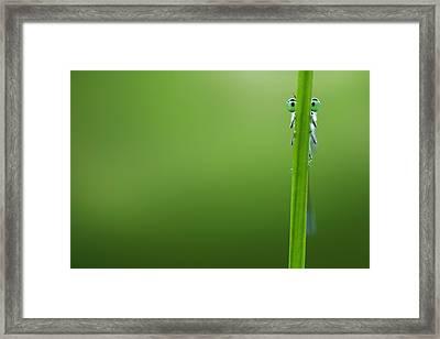 I'm Hiding Framed Print by Roeselien Raimond