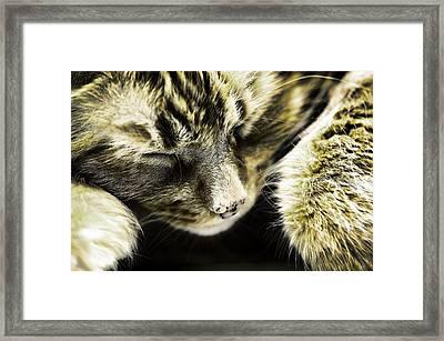 I'm Is Sleeping Framed Print