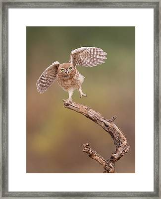 I'm Just A Gigalo... Framed Print