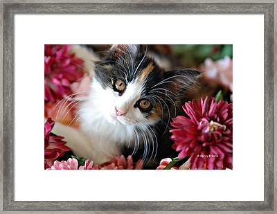 Framed Print featuring the photograph I'm Just So Adorable by Kenny Francis