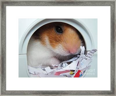 Framed Print featuring the photograph I'm Keeping My Eye On You by Vicki Spindler