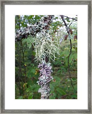 I'm Liken This Lichen Framed Print