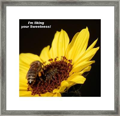 Honey Bee Sweetness Framed Print
