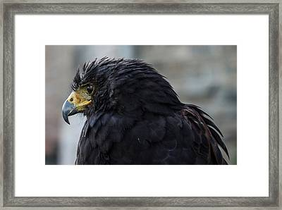 Im Looking For Framed Print by Alessandro Berselli