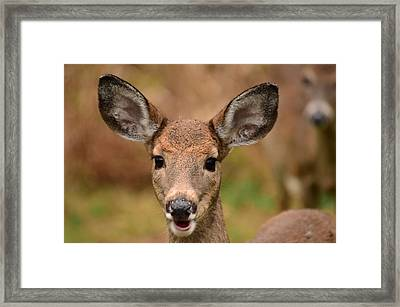 I'm Never Alone Framed Print by Lori Tambakis