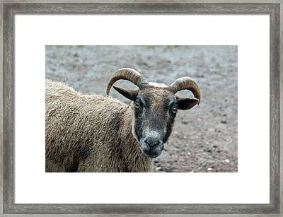 Im Not Just Another Pretty Face Framed Print by Suzanne Gaff