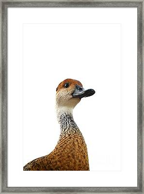 I'm Not Quacking Framed Print