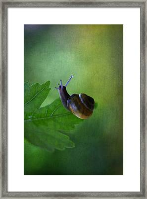 I'm Not So Fast Framed Print