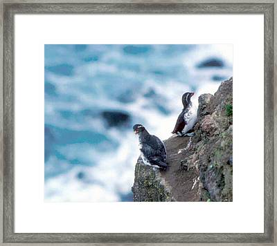 I'm Not Talking To You Either Framed Print by F Hughes
