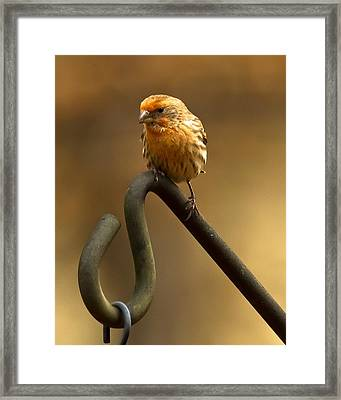 I'm Orange Framed Print