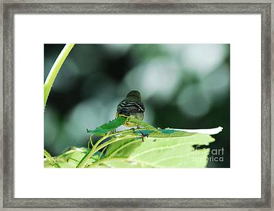 I'm Outta Here Framed Print