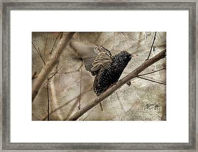 I'm Outta Here Framed Print by Lois Bryan