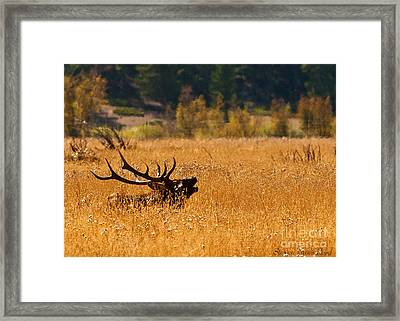 Framed Print featuring the photograph I'm Over Here by Steven Reed