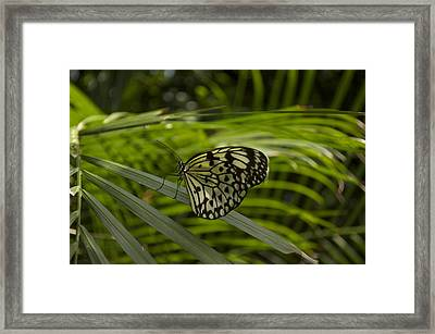 Framed Print featuring the photograph I'm Ready For My Closeup by Sandy Molinaro