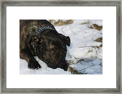 I'm Really Not So Tough Framed Print