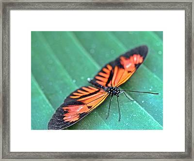 Im Resting Framed Print by Atchayot Rattanawan