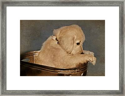 I'm Sorry Framed Print by Maria Dryfhout