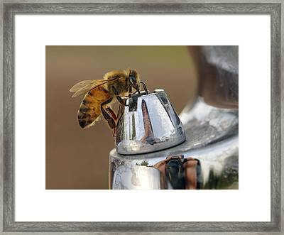 Framed Print featuring the photograph I'm Thirsty by Meir Ezrachi