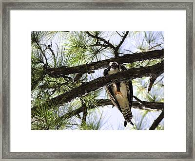 I'm Trying To Eat Here Framed Print by Frank Feliciano