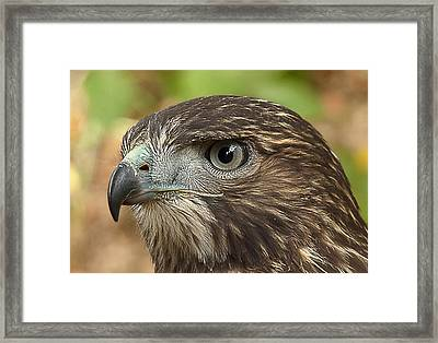 I'm Watching You Framed Print by Randy Hall