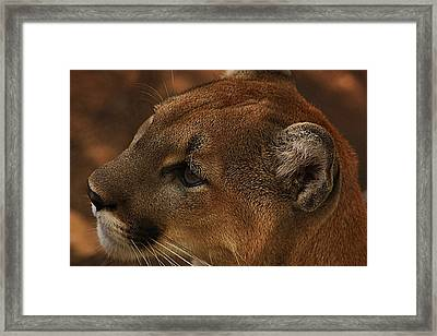 I'm Watching You... Framed Print