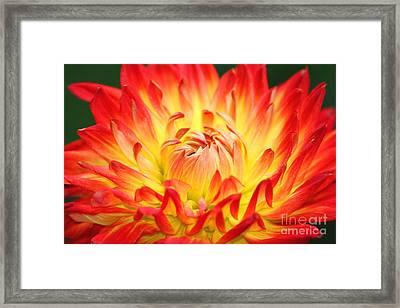 Img 0023 Flor En Rojo Detalle Framed Print