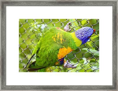 Img 30 Framed Print