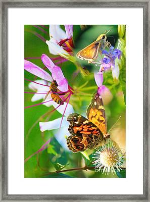 Img 90 Framed Print