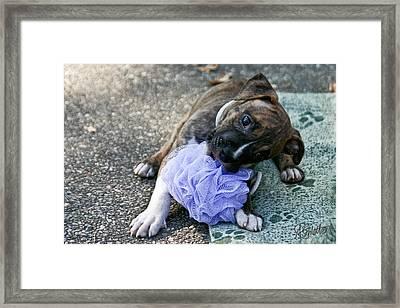 Imma Git U    Pit Bull Pup Framed Print