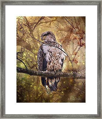 Framed Print featuring the digital art Immature Bald Eagle In Solitude by J Larry Walker